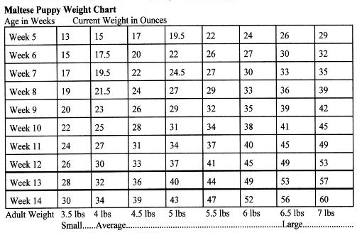 Great Pyrenees Weight Chart Ibovnathandedecker